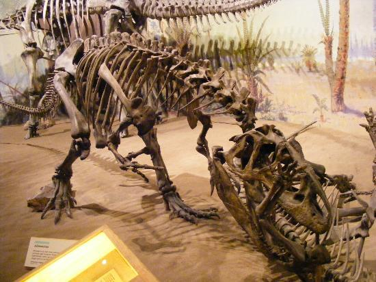 Royal Tyrrell Museum: Lunch Time!