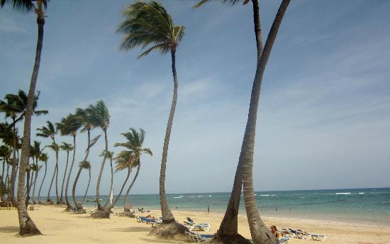 Sirenis Punta Cana Resort Casino & Aquagames: Palmier