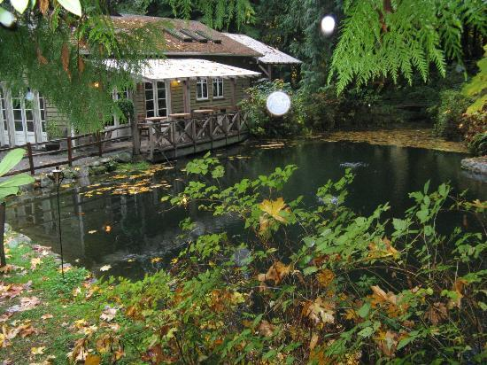 Treehouse Point : There are several ponds throughout the property. Peaceful. Tranquil. Good energy.