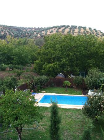 Casa la Nuez: Pool in the back yard. Olive trees in the distance.