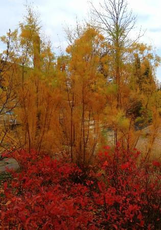 Reiman Gardens: more fall colors