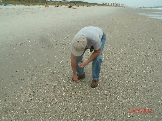Myrtle Beach State Park Looking For Shells North