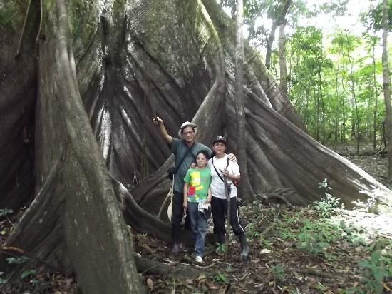 Amazon Reise Eco Lodge: El árbol gigante