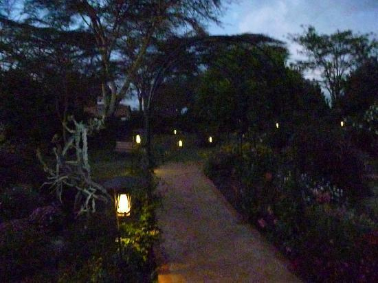 Wildebeest Eco Camp: Grounds at night