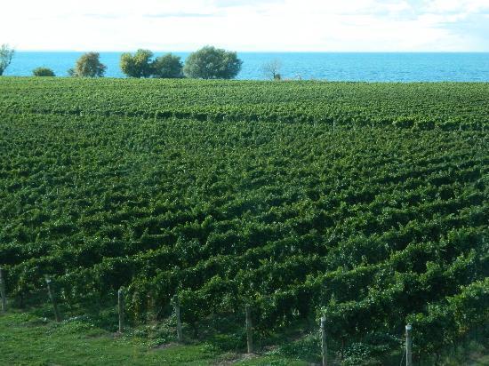 Niagara Grape & Wine Tours: View of Lake Ontario from Konzelmann Estate Winery
