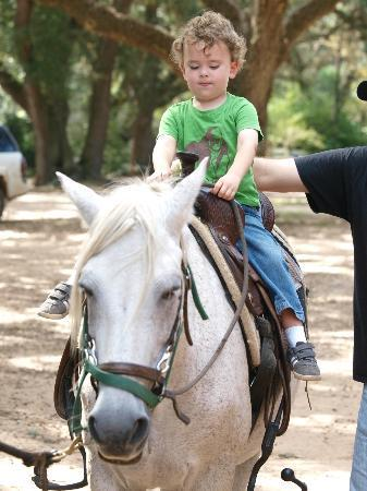 BlissWood Bed and Breakfast Ranch: The boy on the horse