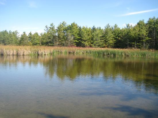 Little Cataraqui Creek Conservation Area: marshlands