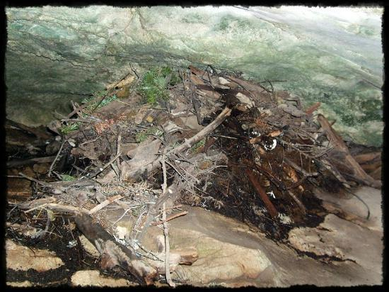 Canmore, Canada: One of the Packrat nests the cave was named after.