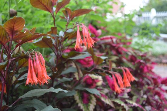 Prescott Park: flowers