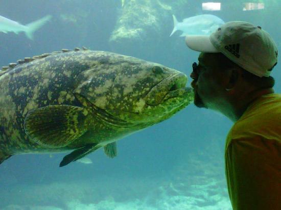 The Cove at Atlantis: Fish Kiss