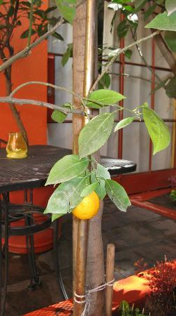 The Red Tree House: fruit trees in courtyard