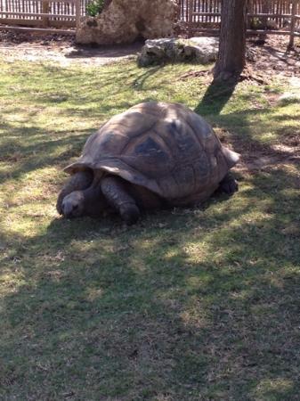 Tulsa Zoo: soo big!