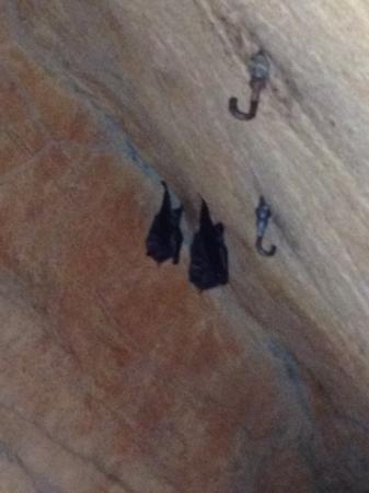 Tulsa Zoo: bats!!