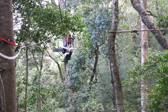 Tsitsikamma Canopy Tours: Hands free...Wheeeeee!