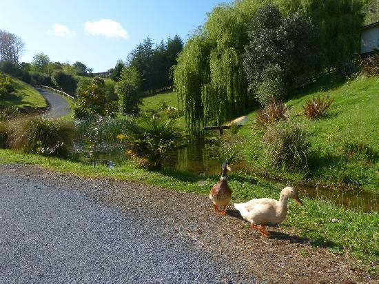أفالون ريزورت: Down the long driveway, by the spring water stream. 