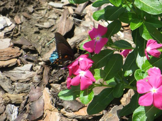 Dauphine Hotel Bed and Breakfast: Butterfly in the garden