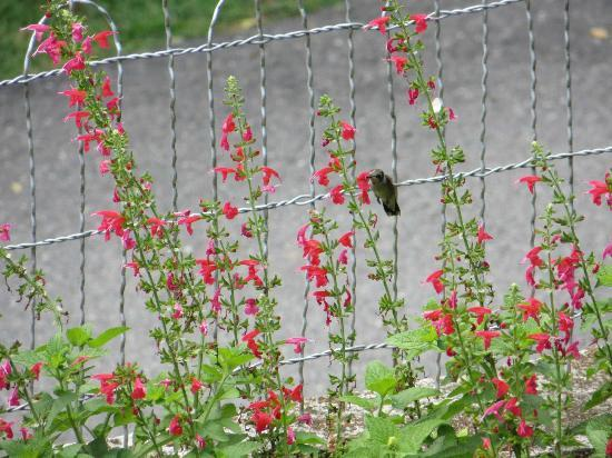 Dauphine Hotel Bed and Breakfast: Hummingbird in the garden