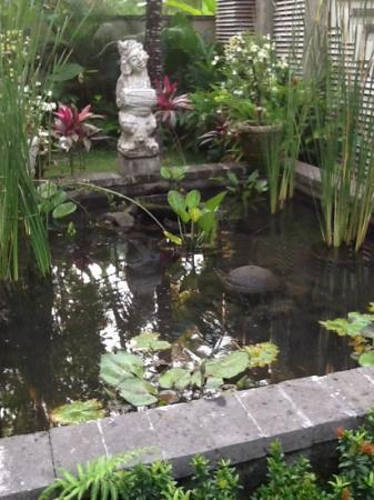 Puri Sunia Resort: fish pond in the garden