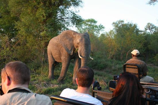 Lion Sands River Lodge: Example of how close you may get to wildlife