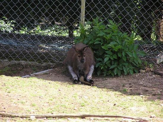 Peaugres Safari Parc照片