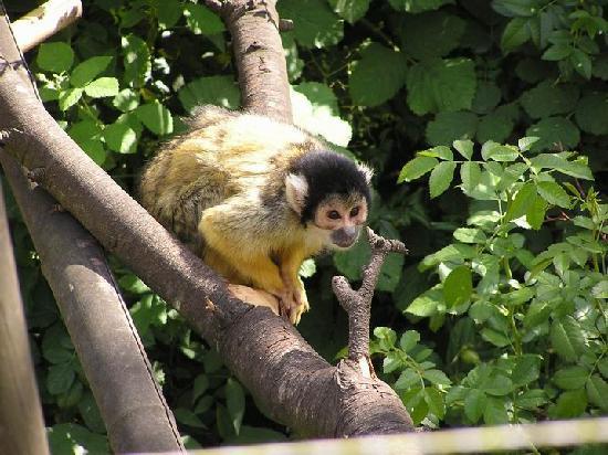Peaugres Safari Parc: safari de Peaugres