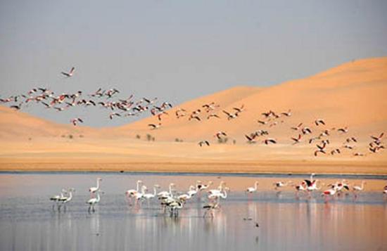 Ouargla, Algérie : الطيور المهاجرة في ام الرانب