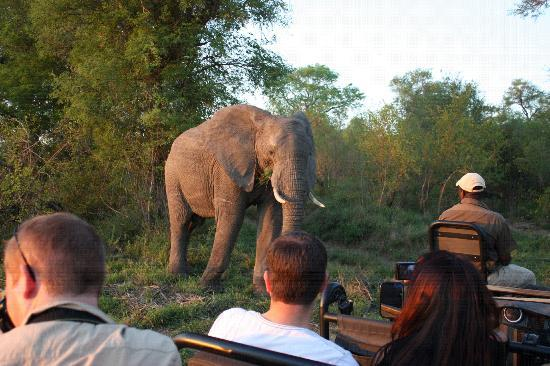 Lion Sands River Lodge: You can see how close you may get to wildlife from the safety of the Jeep