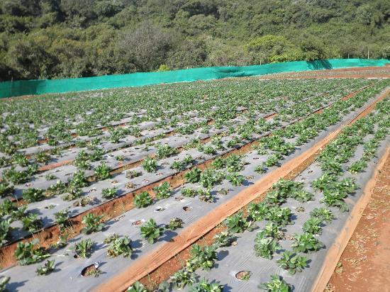 Hotel Dreamland : strawberry garden