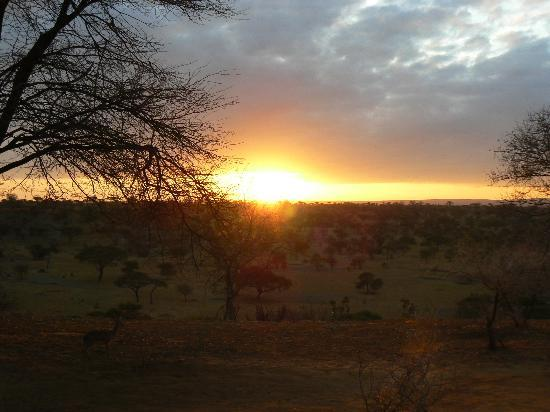 Tarangire Safari Lodge: Sunrise seen from our room + dikdik