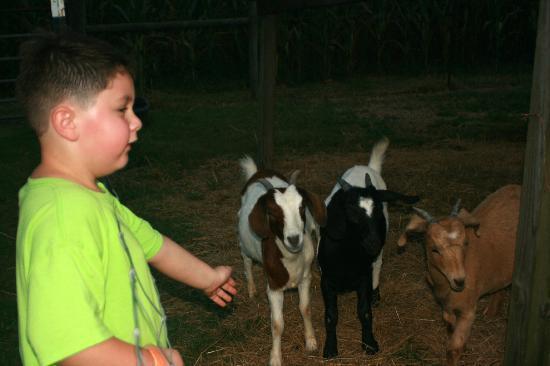 Cagle's Dairy: Petting Farm