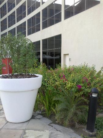 Centro Sharjah: флора