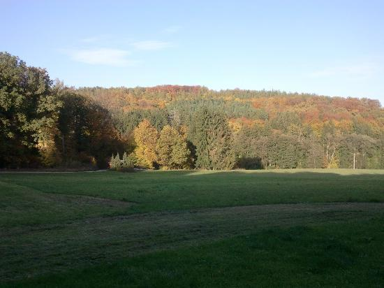 Waldhotel Sulzbachtal: View on the woods, outside the hotel