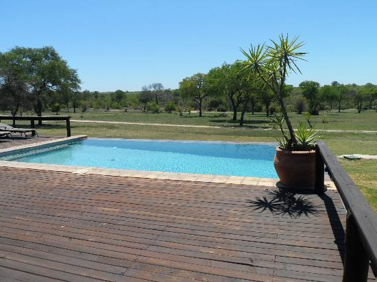 Nkorho Bush Lodge: The beautiful infinity pool