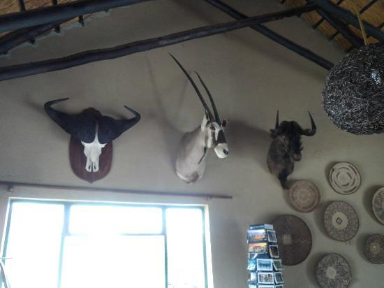 Nkorho Bush Lodge: few throphy heads on show