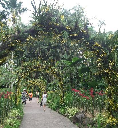 For nature lovers travel guide on tripadvisor for Au jardin singapore botanic gardens