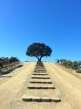 Pear Valley Vineyard: Steps leading up to wedding area