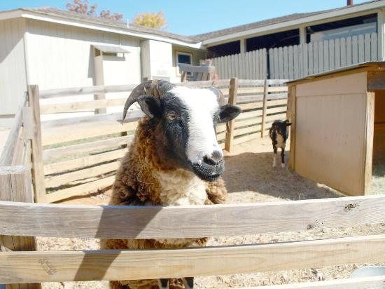 Ozark Folk Center State Park: Animal exhibits usually allow petting and feeding.