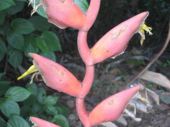 Arenal Volcano Inn: Plant life.