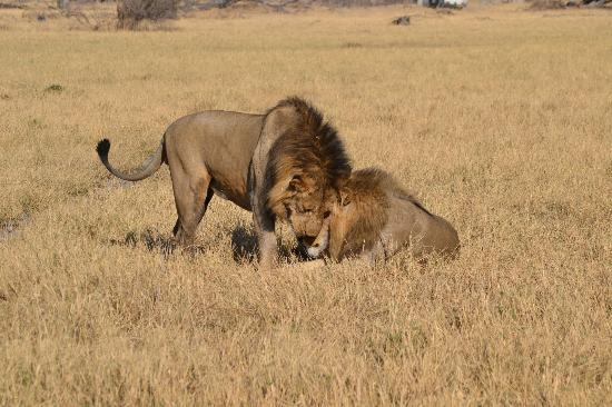 Savuti Chobe National Park