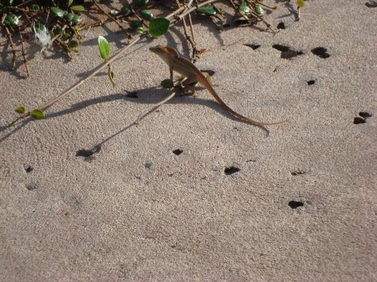 Floridays Resort Orlando: These little guys are everywhere in Orlando but totally harmless!