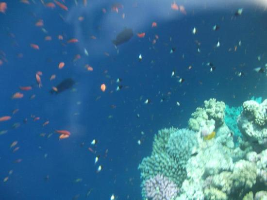 The aquatic life is so rich at the Blue Hole, you can spot most of it by only snorkeling.