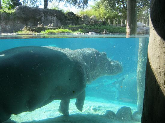 Busch Gardens: What Happened To All Of The Fish?