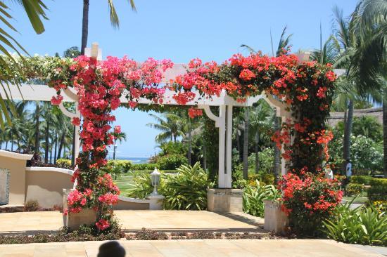 Sugar Beach Golf & Spa Resort: bougainvillier