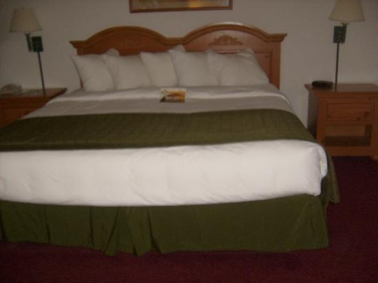 American Inn and Suites: this is an awesome bed five terrific pillows on this king sized bed