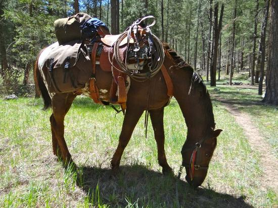 """WolfHorse Outfitters Day Tours: """"my"""" horse Redhawk"""