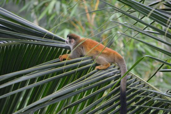 La Mariposa Hotel: Monkey!!!