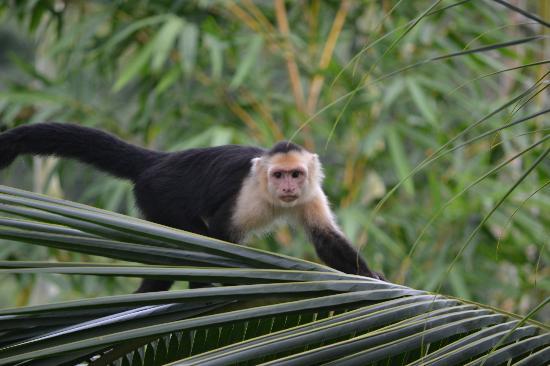 لا ماريبوسا هوتل: Monkey!!!