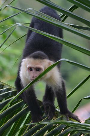 La Mariposa Hotel: Loved the monkeys!!!