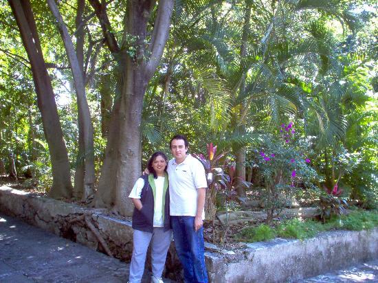 arboles frutales picture of garden borda cultural center