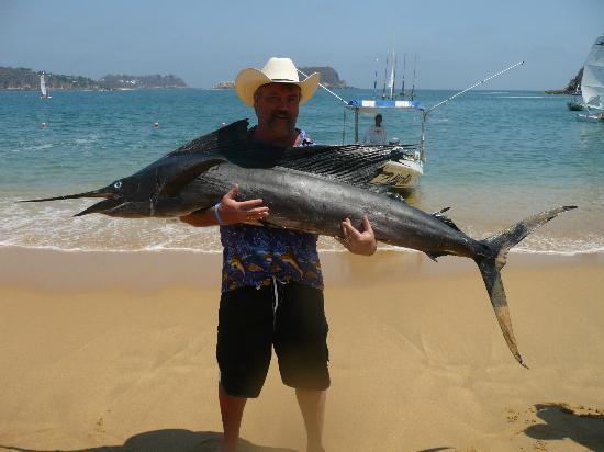 Las Brisas Huatulco: sailfish caught jest off shore